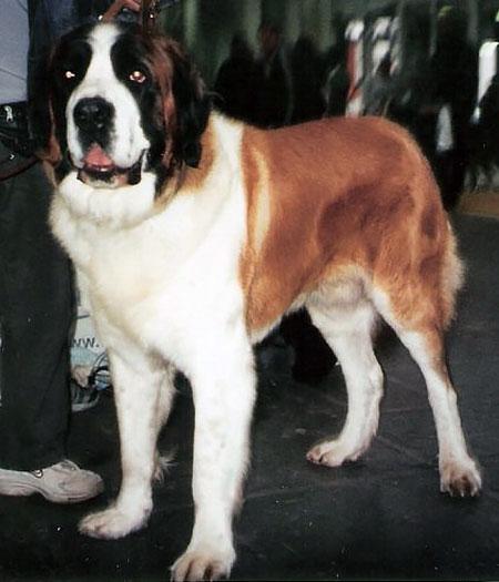 http://www.dogi.ru/uploads/posts/2014-02/1392232178_moscowwatchdog.jpg